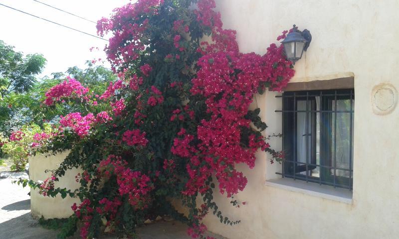Petra & Elia traditional stone villa, holiday rental in Aptera