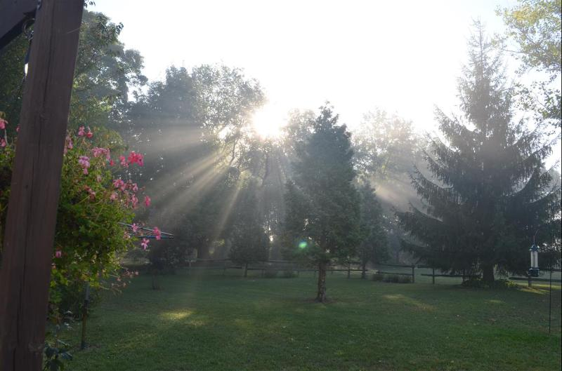 One early summer morning in the backyard
