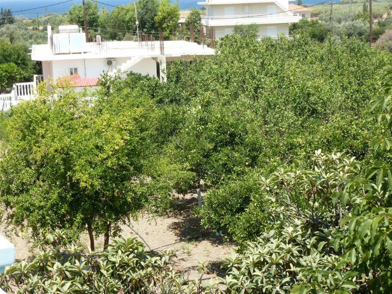 Views from the balcony over the gorgeous citrus grove.