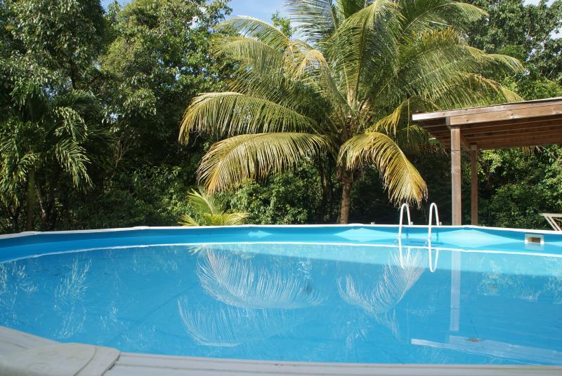 piscine commune extérieur plogée en pleine nature.