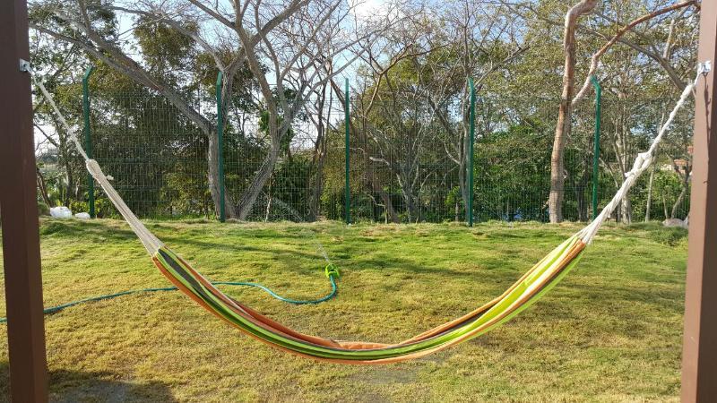 backyard with natural grass and comfortable hammock