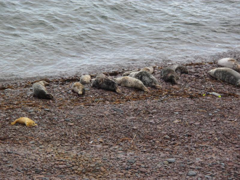 Seals in 'The Haven'