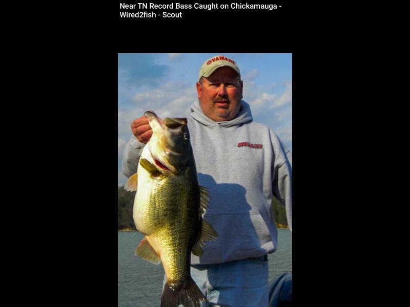 Chickamauga Lake known for TN best Bass Fishing !