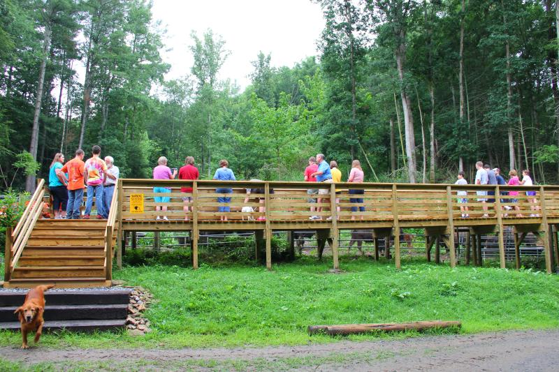 The bison viewing platform is a great place to see the bison up close!