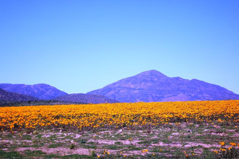 Namaqualand changes kaleidoscope,want to experience it then Verbe Farm is the place to stay.
