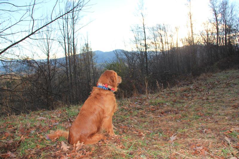 Even Fido enjoys a nice sunset on vacation!