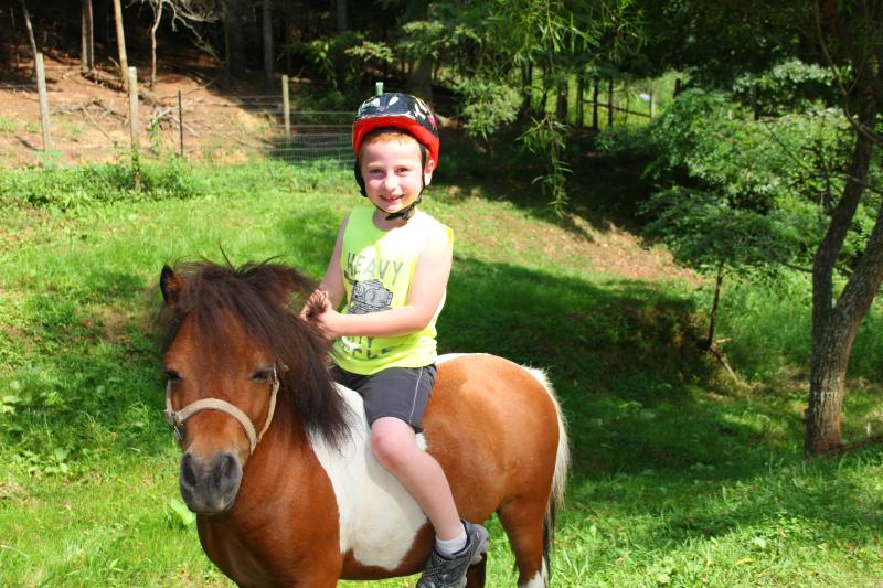 Mini horse rides available for children that weigh 65 lbs or less.