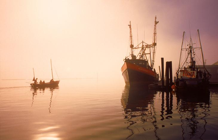 Early morning fog in the nearby Port of Garibaldi