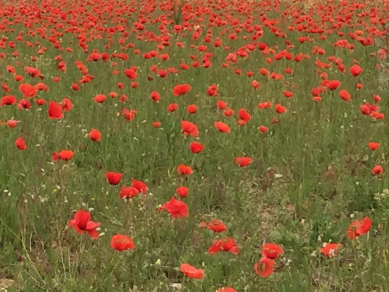 Wiesen im Sommer in der Toskana