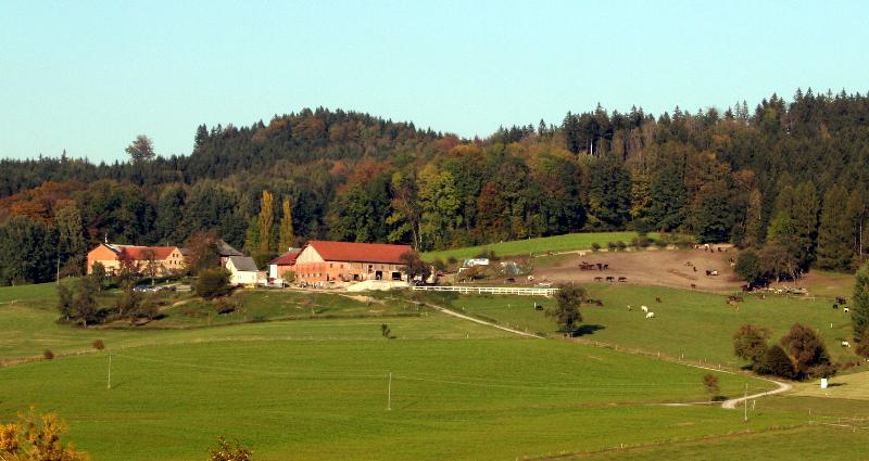 Pferdehof Koaser Minerl, Ferienwohnung in Attersee