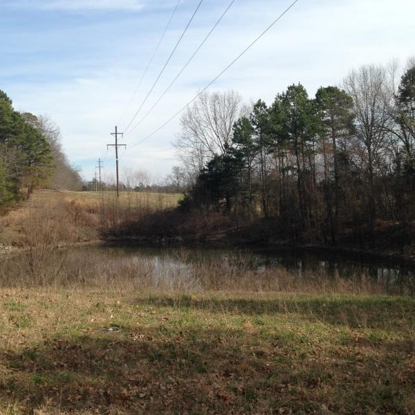 1 acre pond next to the guest house