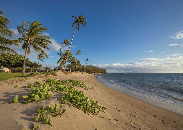 Maui Sunset is situated on this beautiful sandy beach