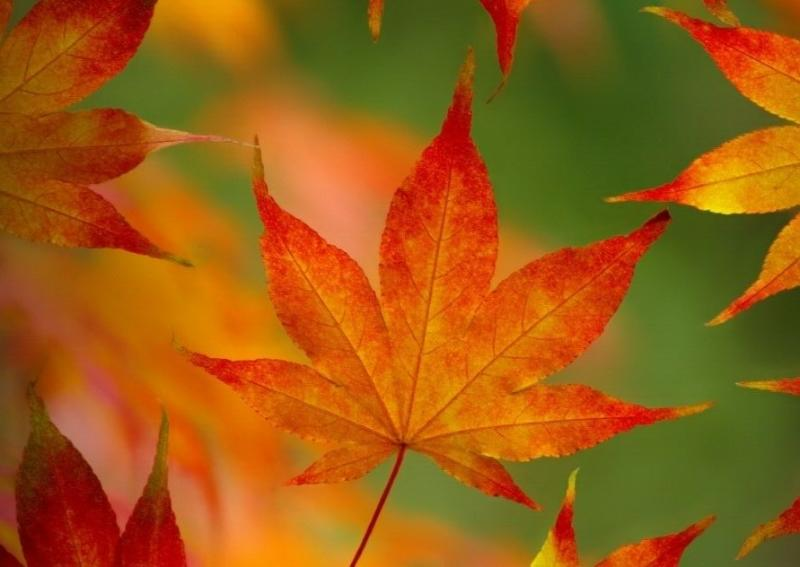 Spectacular Autumn