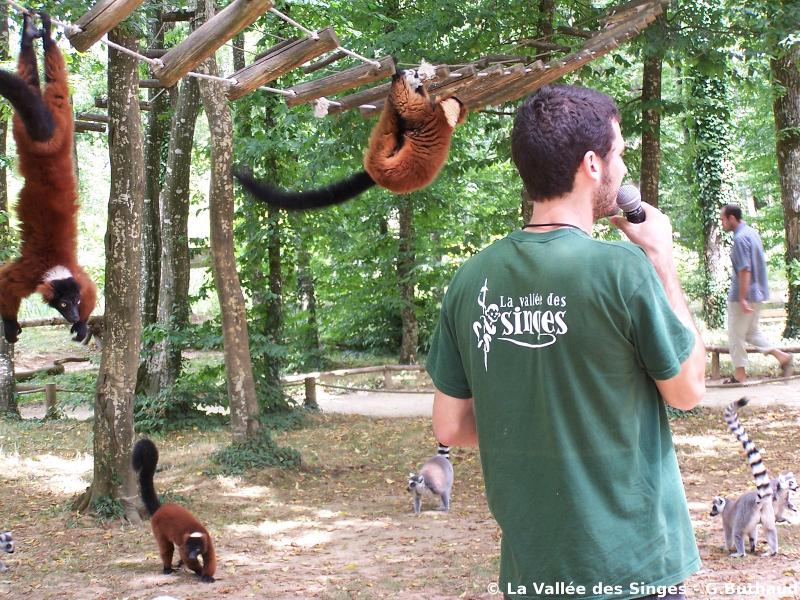 La Vallée des Singes, a real treat for all ages.