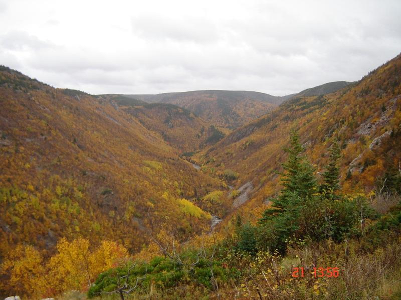Fall colours,Cape Breton Highlands National Park, 45 minutes away.