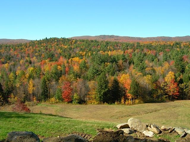 The best foliage is right out your window