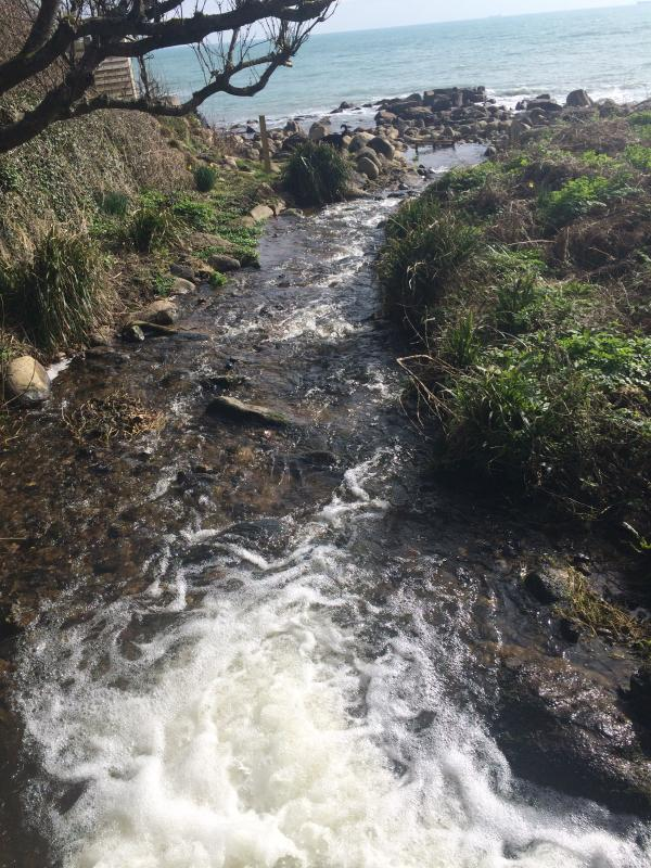 Beautiful wood & stream walk out on to sea, near Lamorna