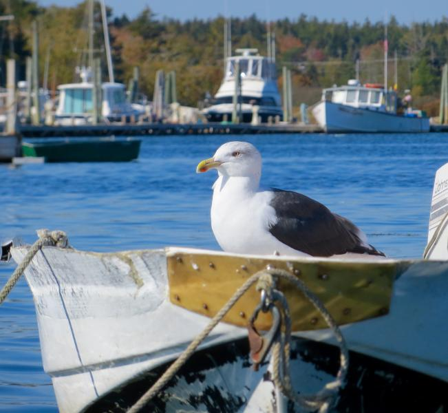 Bass Harbor residents.
