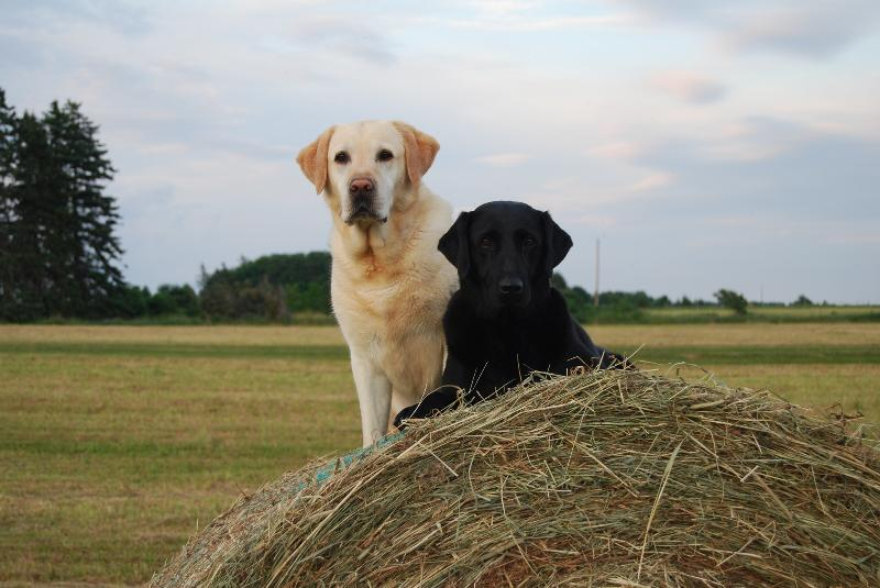 Pet friendly cottage, bring your four-legged family along!
