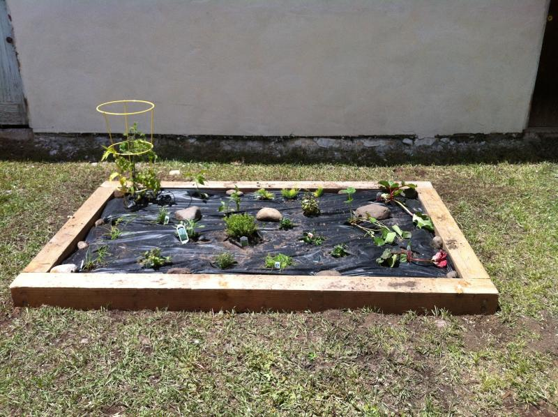 Herb and vegetable garden for your use.  Success is varied.