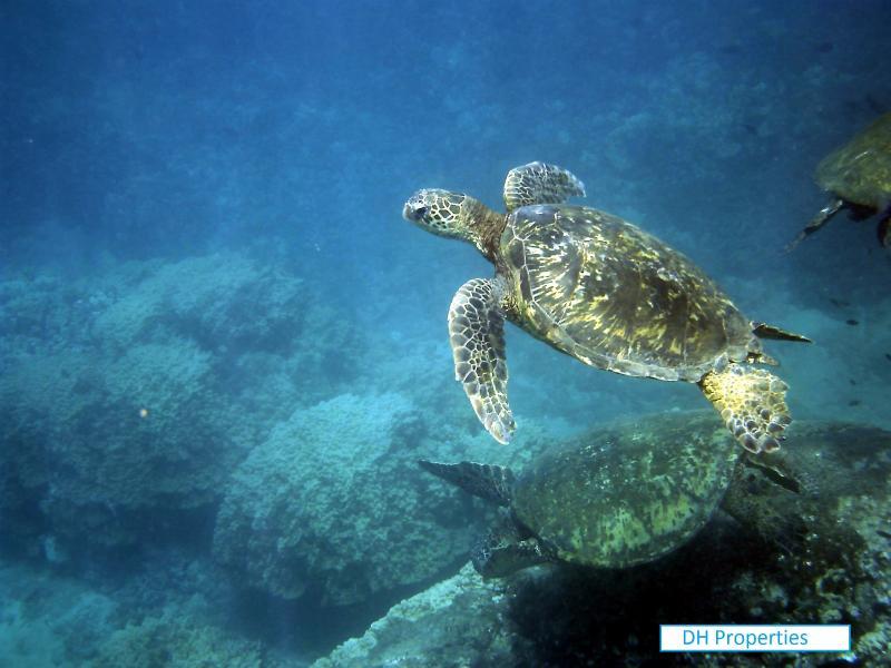 Turtle Rock in Makaha