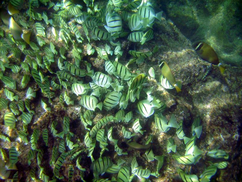 Lots of fish at Mauna Lahilahi Beach