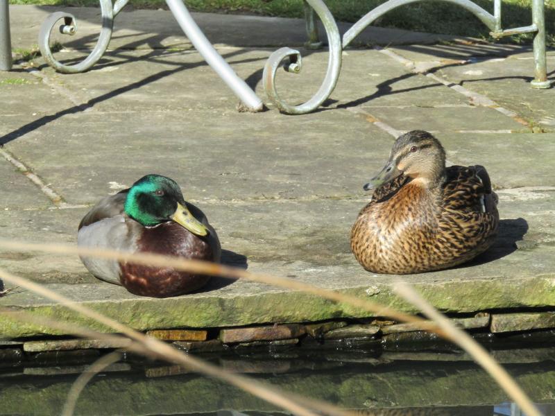 Ducks taking a break in the sun!