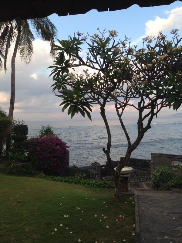 Floração árvores, palmeiras e o mar abundam