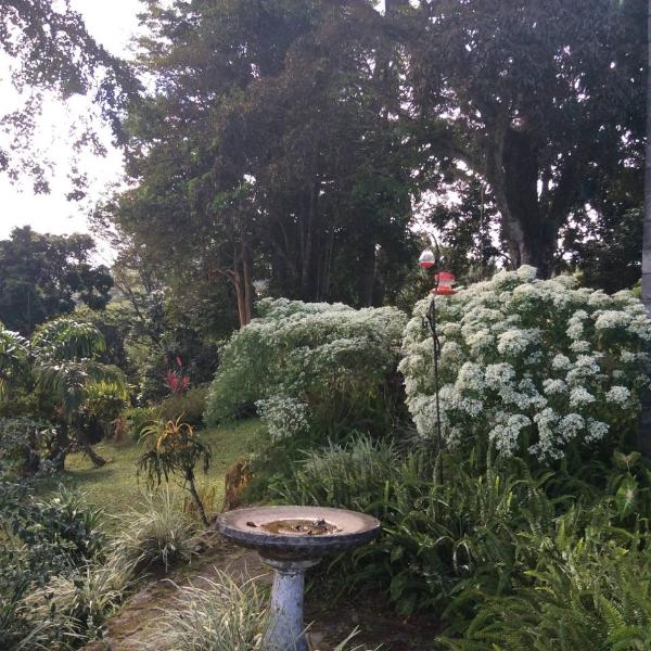 Garden on south side of the house