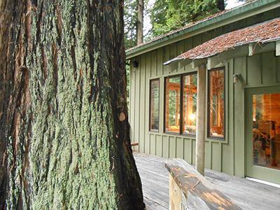 Sequoiatude, massive redwood tree opposite front door