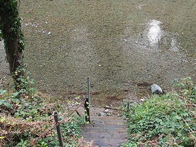 Sequoiatude, Creek Access