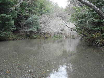 Sequoiatude, Austin Creek on a winter day
