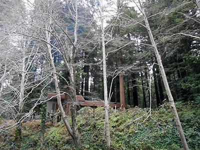 Sequoiatude, View of house from the creek