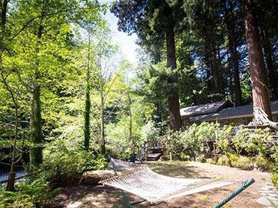 Sequoiatude, Yard in the Summer