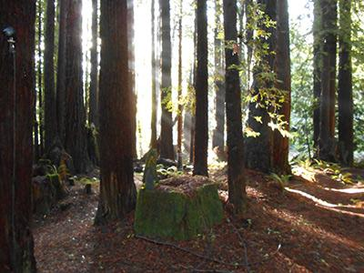 Sequoiatude, Outdoors, Nature to be discovered