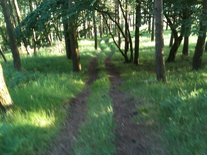 A walk in Wiltonburn wood