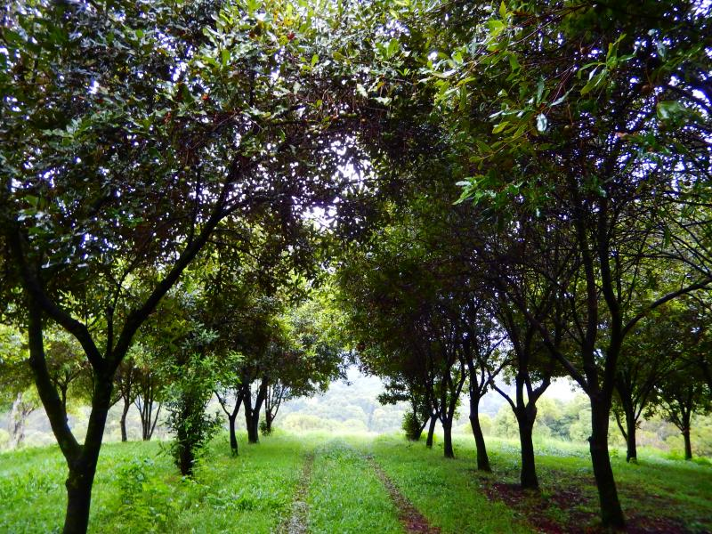 Drive through the Macadamia Tree Plantation at Riverbend  or Walk for hours round the 1900trees.