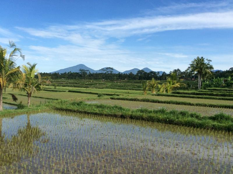 Ubud Rice Field Villa, Private Retreat With Views, location de vacances à Sterling