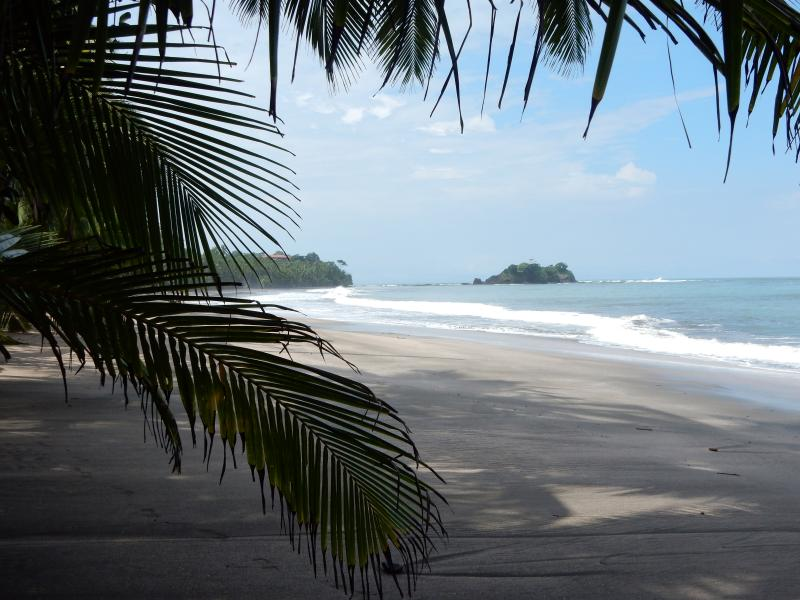 The private natural beach, long and wide, with coconut palms.