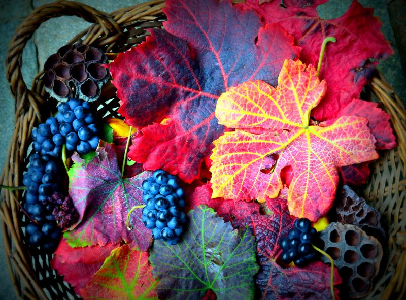 autunno colors