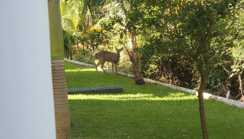 Deer are occasional visitors to the secluded rear terrace at Casa Selva Caribe