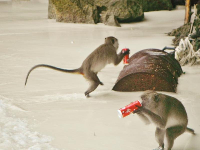 Monkey Island with mischievous monkeys