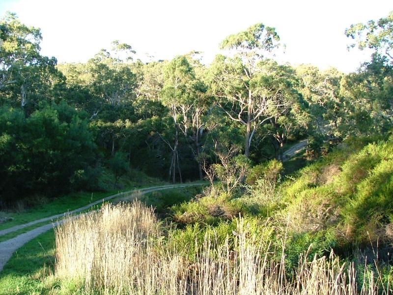 Natural bushland