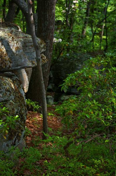 Las grandes rocas y una zona boscosa, exuberantes ofrecen inspiración y una vía de escape.