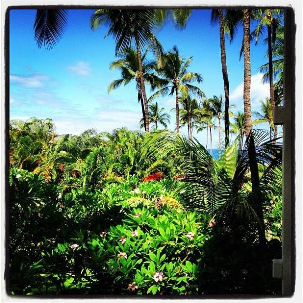 From the lanai, a peekaboo view of the water, depending on the height of the trees!