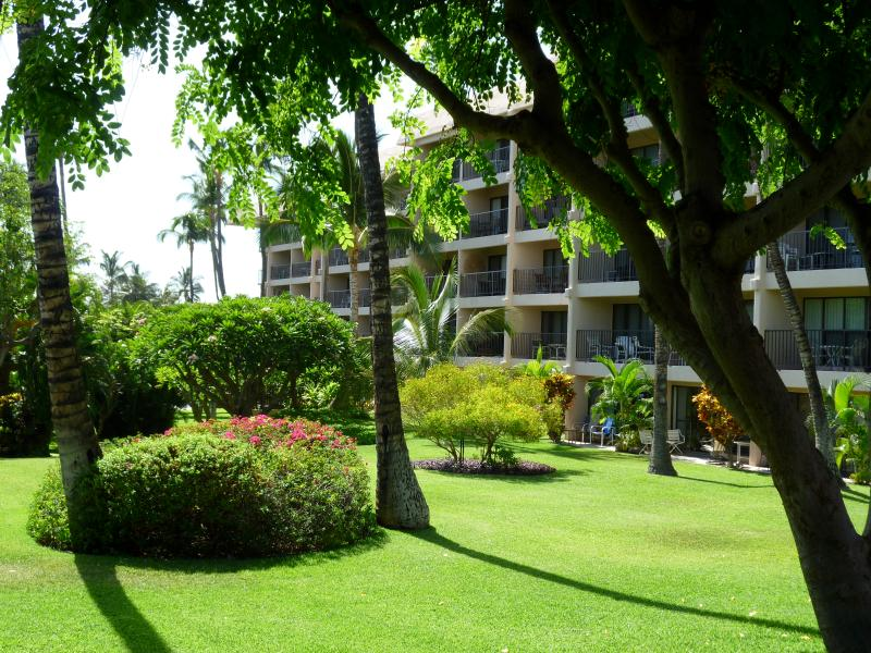 The garden, looking towards our building