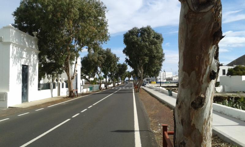 The main tree lined Avenida in Guatiza
