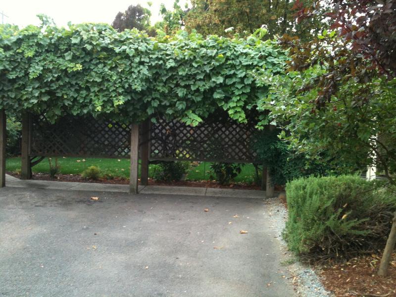 Backyard behind grape arbor.