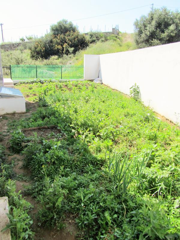 Back Fresh Veg Garden