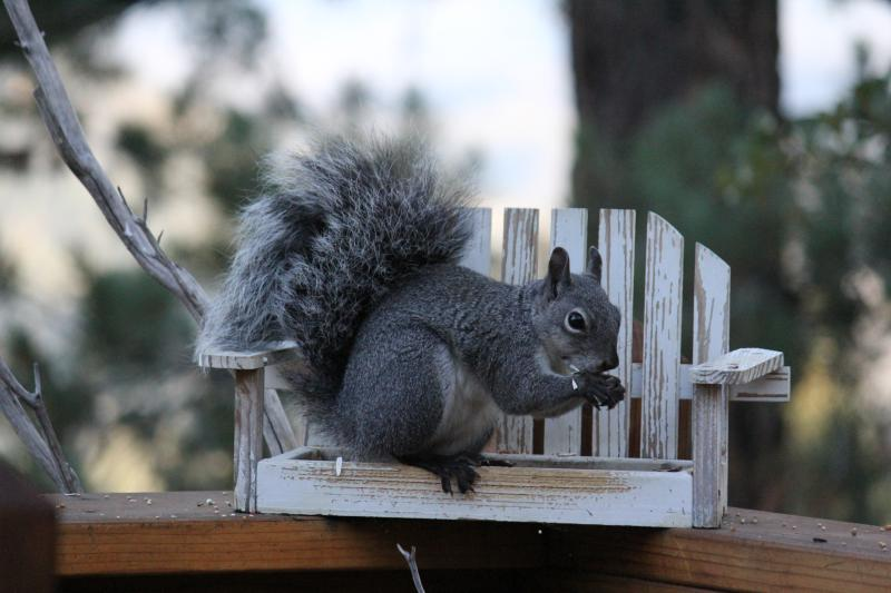 Deck Residents (FREE bird seed provided) but bring peanuts and its a frenzy!